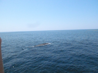 Tufts/Harvard Whale Watch